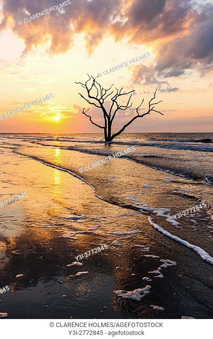 The sun rises over a lone dead oak tree on the beach in Botany Bay Plantation WMA on Edisto Island, South Carolina