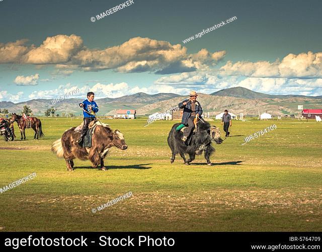 Nomads racing with yaks, Arkhangai Aimag, Mongolia, Asia