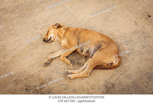 Dog sleeping, in Assi ghat, Ganges river, Varanasi, Uttar Pradesh, India