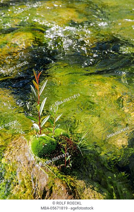 colourful play of water of the Mangfall with moss with Kolbermoor, Upper Bavaria