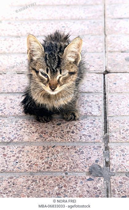 Essaouira, animals, cat, Morocco