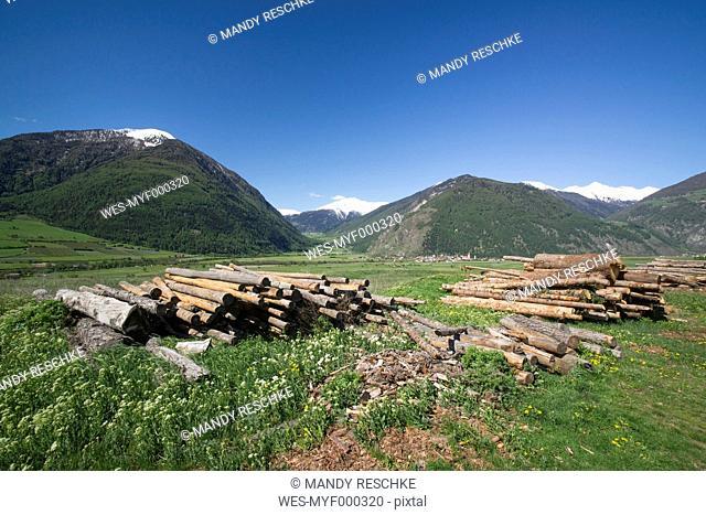 Italy, South Tyrol, Mals, Tartscher Buehel, Tree trunks