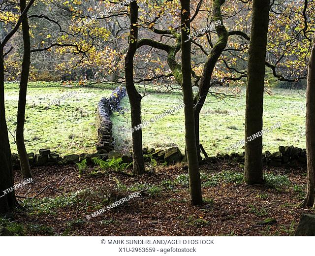 Dry Stone Wall from Middle Dean Woods near Pecket Well Hebden Bridge West Yorkshire England