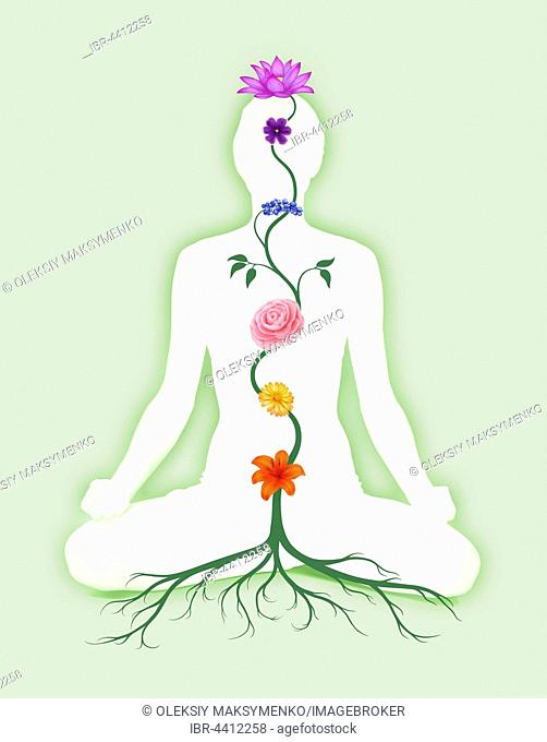 Woman sitting in lotus pose with seven chakra symbols represented as associated with chakras flowers and colors growing from a root chakra