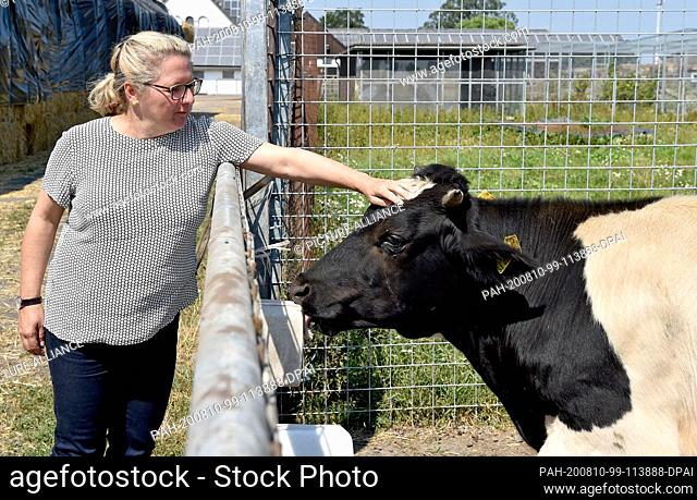 10 August 2020, Germany, Münster: Svenja Schulze, (SPD) Federal Minister of the Environment strokes a German black and white lowland cattle at the Naturland-...