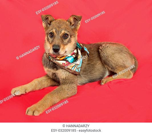 Little yellow puppy lies on red background