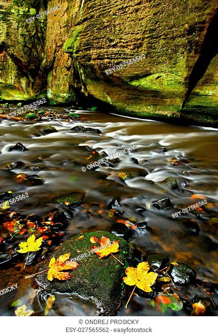 Autumn landscape with orange and yellow leaves in the water, big