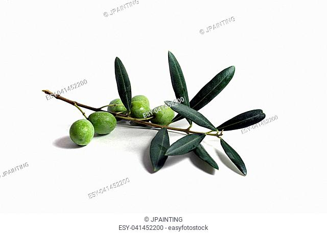Green olives and leaves on an olive tree branch isolated on white background