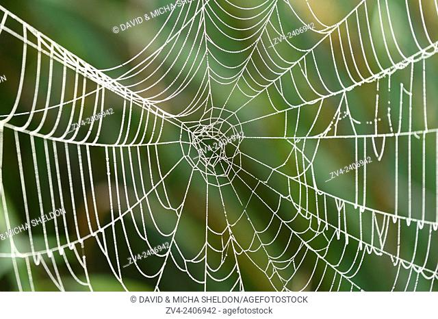 Close-up of a spiderweb in a meadow on early morning in autumn