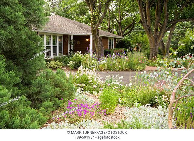 'Homestead Purple' Creeping Verbena, 'Coral Kiss' Penstemon, Scabiosa, Giant Sequoia, Eucalyptus [Verbena canadensis 'Homestead Purple'; Penstemon 'Coral Kiss';...