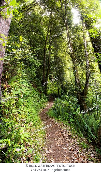 A hiking trail in Del Norte Redwoods State Park, California, USA