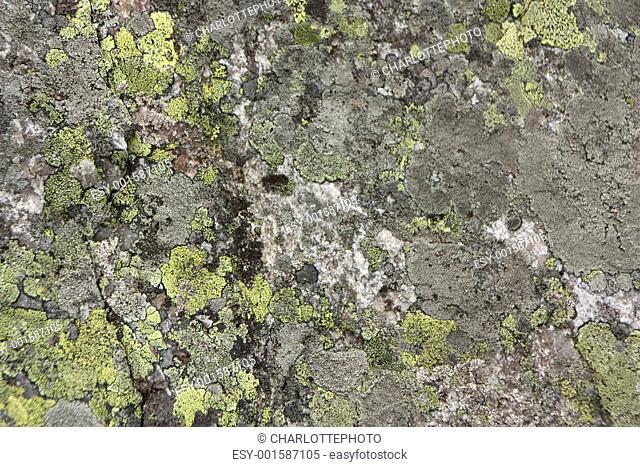 Quartz or limestone with lichen