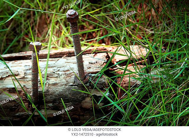 Rusty old screws in wooden log
