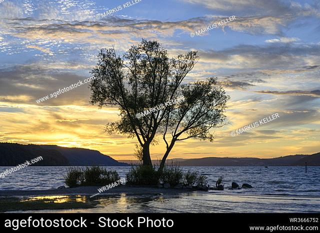 Silhouette of tree growing on shore ofLake Constance at sunset
