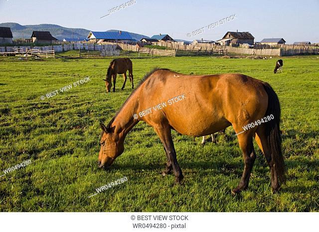Inner Mongolia,Ergun