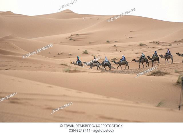 Line of Travelers on Camel Among the Erg Chabbi Dunes, Merzouga, Morocco. Sahara Desert