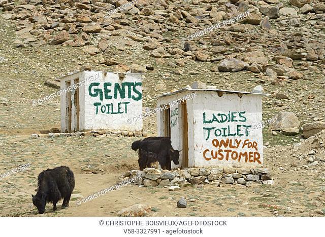 India, Jammu & Kashmir, Ladakh, Khardung valley, Local toilets and nosy yaks