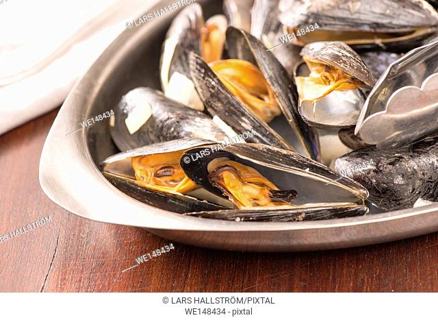 Roasted clams in close up. Seafood dish served. Rustic gourmet shellfish dinner