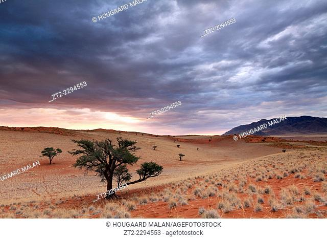 Landscape photo of a dune valley dotted with camelthorn trees under a dramatic sunset sky. Namib Rand, Namibia