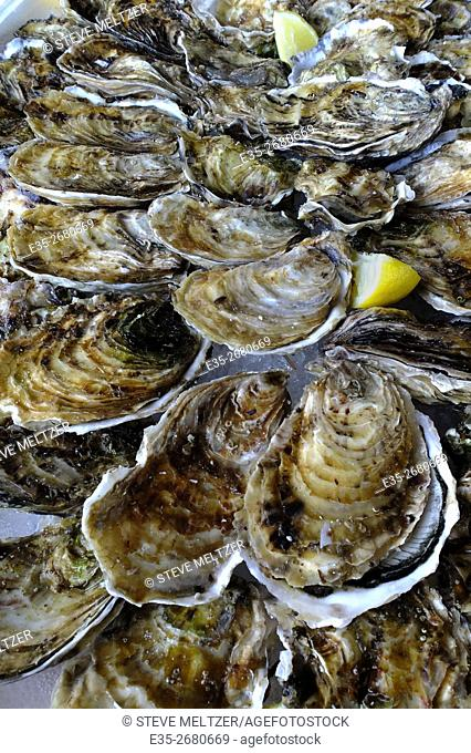 Fresh oysters ready to be eaten, Bassin de Thau, Languedoc-Roussillon, France