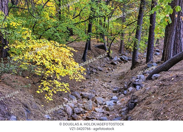 Fall Colors along Dry Stream Bed of Ahwahnee Hotel Yosemite National Park CA USA World Location