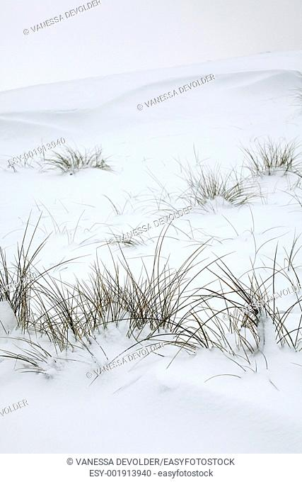 Dunes and grasses covered with snow