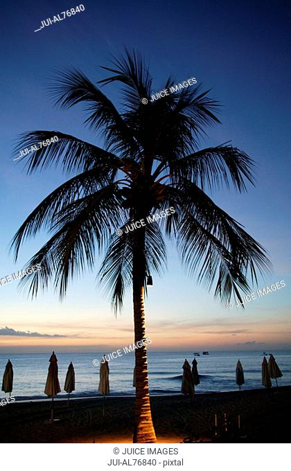 Silhouette view of a palm tree against sunset sky, Barbados