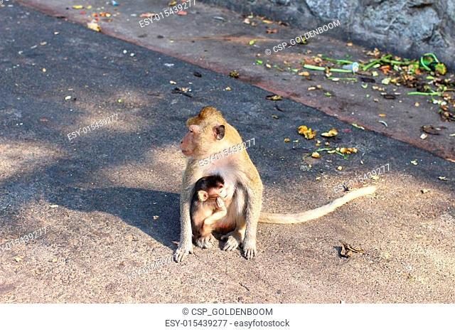 monkey family and baby monkey