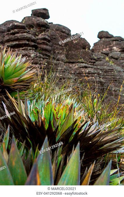 Trekking in Mount Roraima Venezuela South America