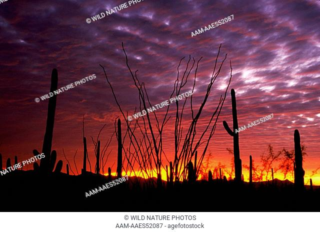 Sonoran Desert sunset; Arizona