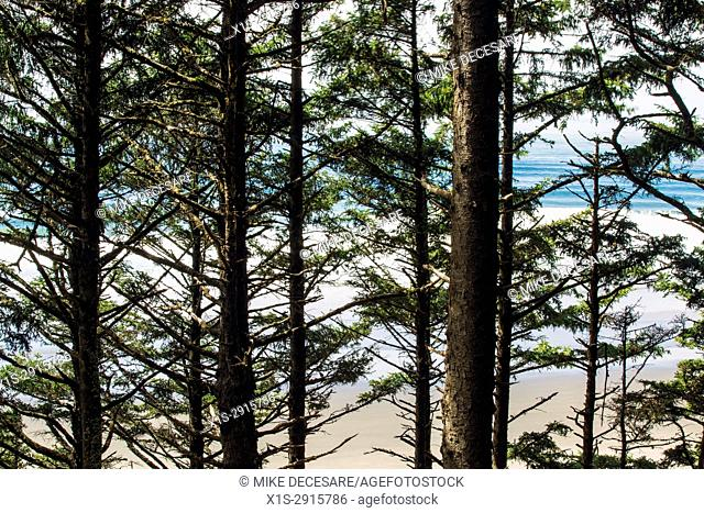 Beach and ocean views from a hiking trail above Crescent Beach, Oregon, entices the hiker to keep going