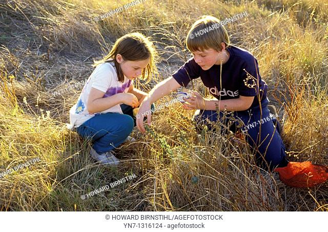 two children in long dry grass collecting grasshoppers
