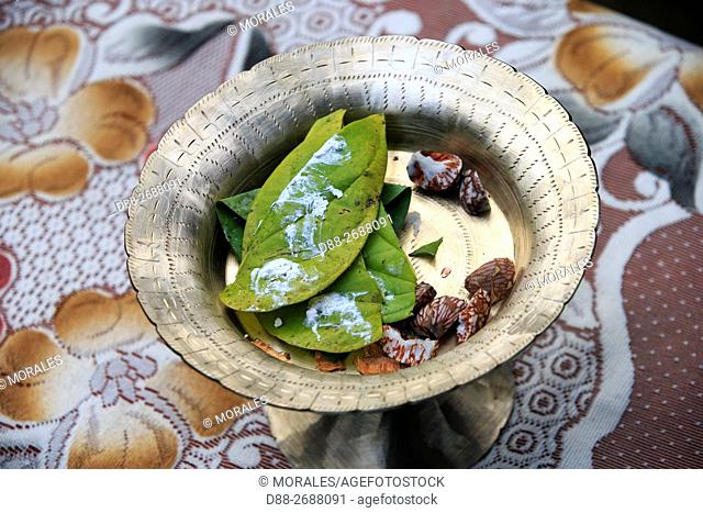 South east Asia, India,Tripura state,Preparation for chewing betel nut with lime makes the red saliva