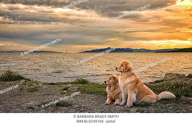Dogs relaxing on beach at sunset