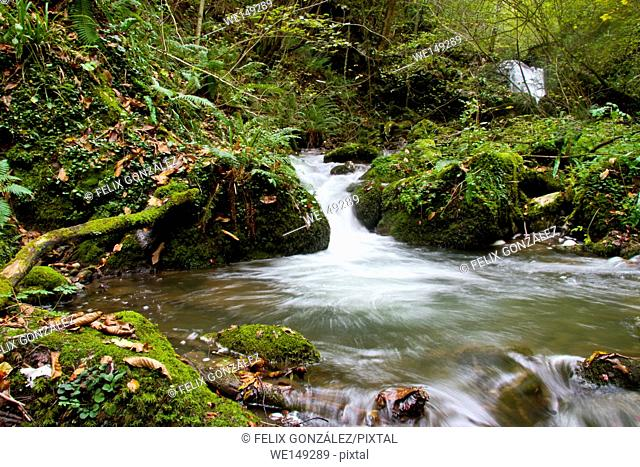 Mossy Cascade in Ruta de las Xanas, Asturias, Spain