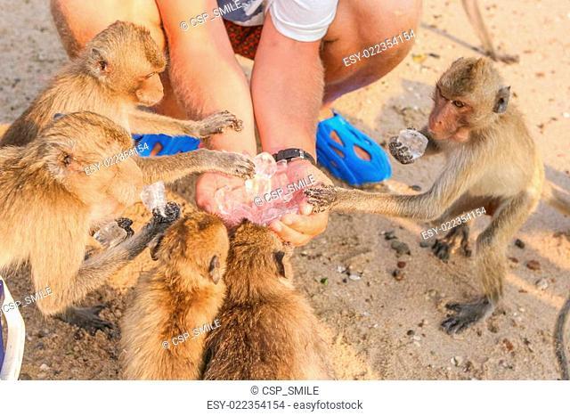 Monkey eats ice