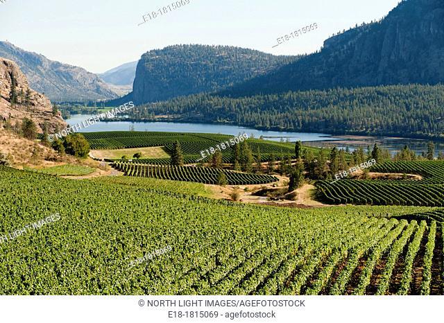 Canada, BC, Okanagan Falls  Okanagan Valley  Blue Mountain Vineyards in the landscape above Vaseau Lake