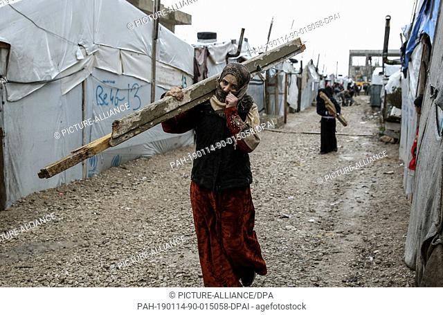 13 January 2019, Lebanon, Barelias: A Syrian refugee woman carries a lodge of wood to be used in supporting her family·s tent from an upcoming storm at the...