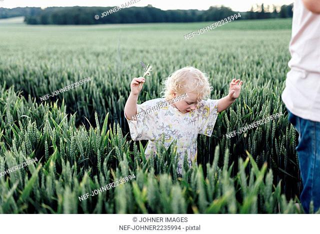 Girl walking through wheat field