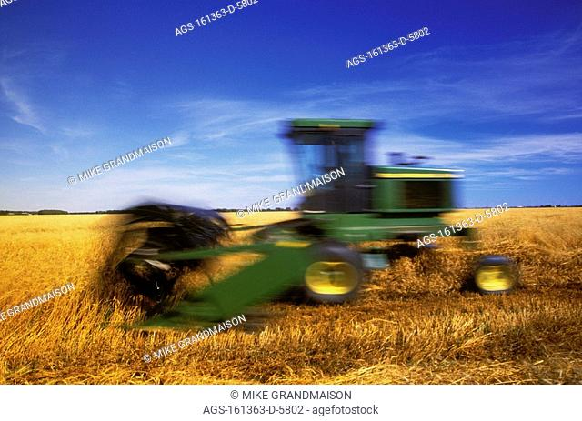 Agriculture - Motion study of a swather cutting and windrowing wheat for drying prior to a combine harvesting the crop / Canada - MB