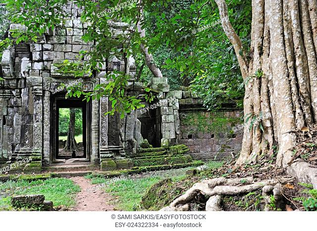 Strangler fig (Ficus sp. ) tree roots on ruins, Ta Prohm Temple, Angkor Wat, Siem Reap, Cambodia