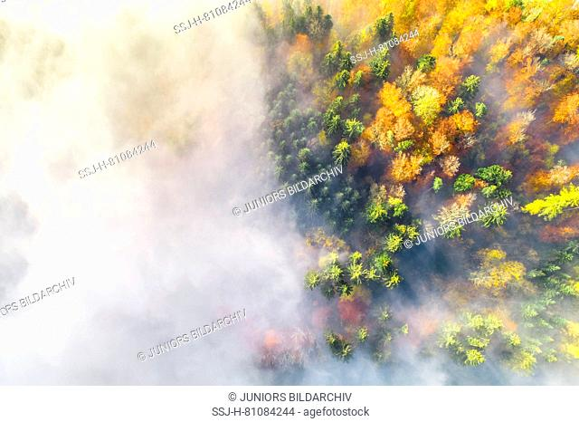 Mixed forest with fog in autum, photographed by an unmanned aerial vehicle (UAV). Zurich Oberland, Switzerland
