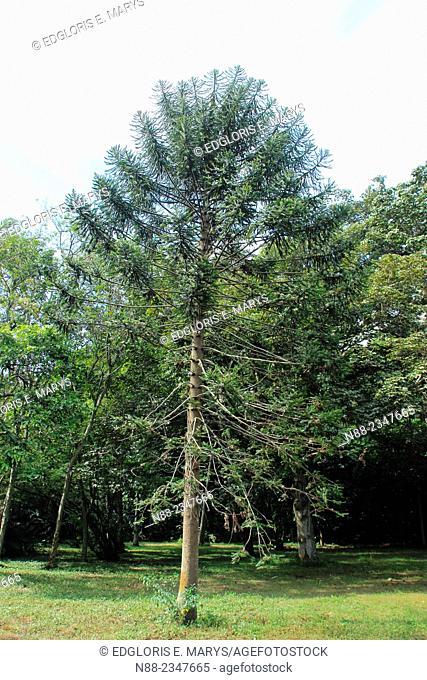 Trees, Botanical Garden, Venezuela