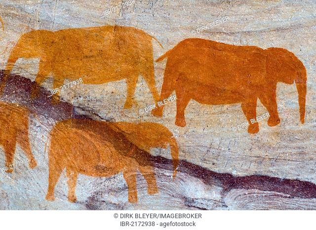 Drawings of elephants by the San, bushmen, Cedarberg, Western Cape, South Africa, Africa