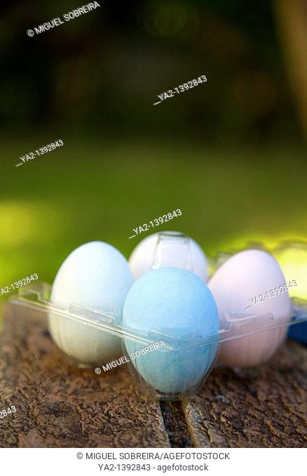 Easter eggs in plastic holder