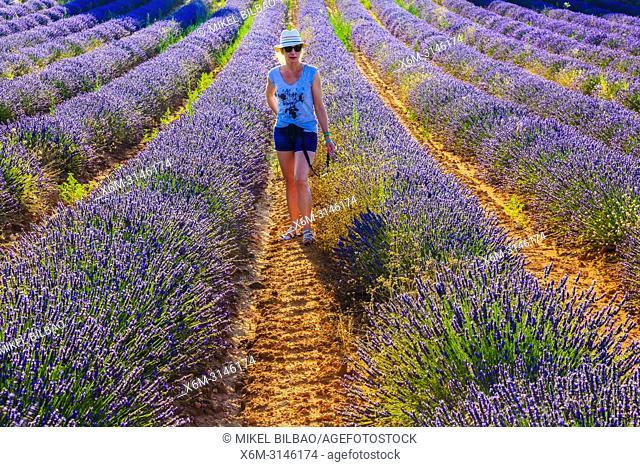 Lavender fields and a woman. Brihuega, Guadalajara. Castile-La Mancha. Spain, Europe