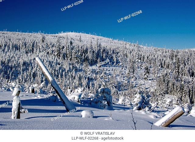 Polom Mountain, Sumava National Park, the Southwestern Bohemia, Czech Republic