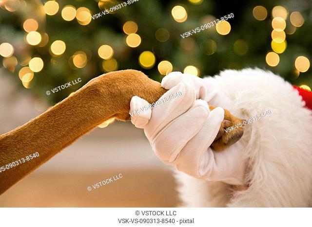 Close up of Santa holding dog's paw