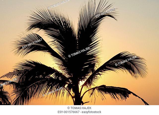 Palm in susnet light in Puerto Escondido