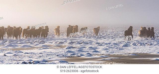 Iceland Fog Scenic Horses